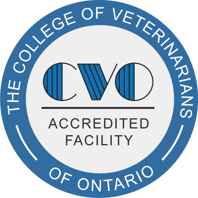 CVO Veterinary Bradford
